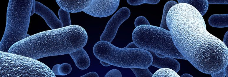 Legionella, a bactéria que assustou Portugal.